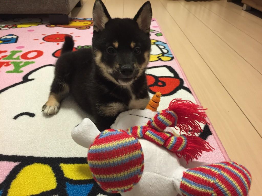 黒豆柴犬 おもちゃ