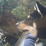 週末は鬼怒川と日光へ行ってきましたぁ🐕 Part 3