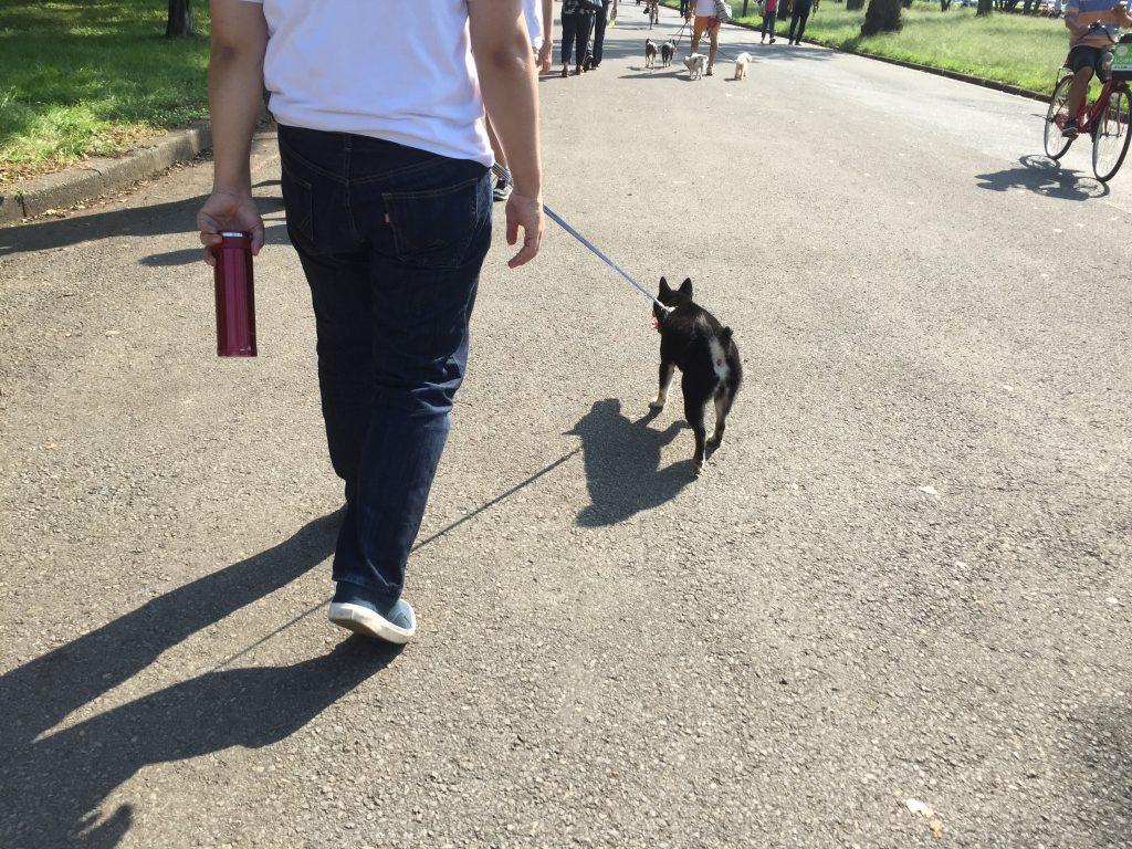 黒豆柴犬 うめ太 生後8ヶ月 水元公園
