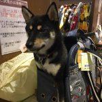 週末は鬼怒川と日光へ行ってきましたぁ🐕 Part 1
