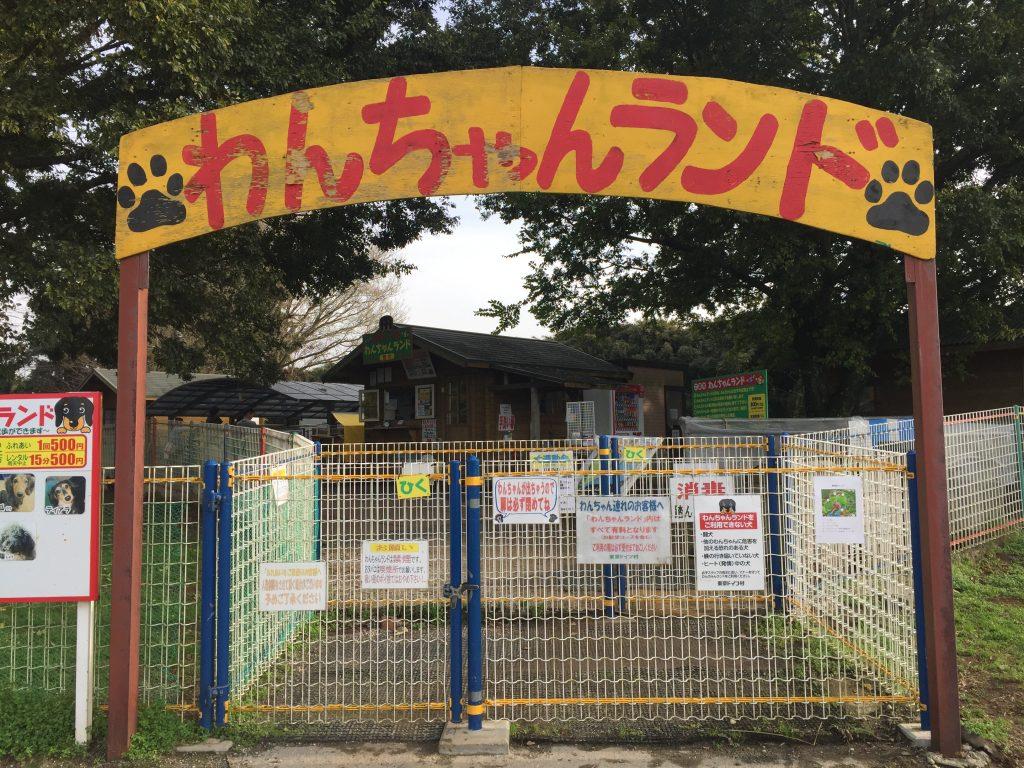 黒豆柴犬 うめ太 生後10ヶ月 東京ドイツ村 わんちゃんランド ドッグラン