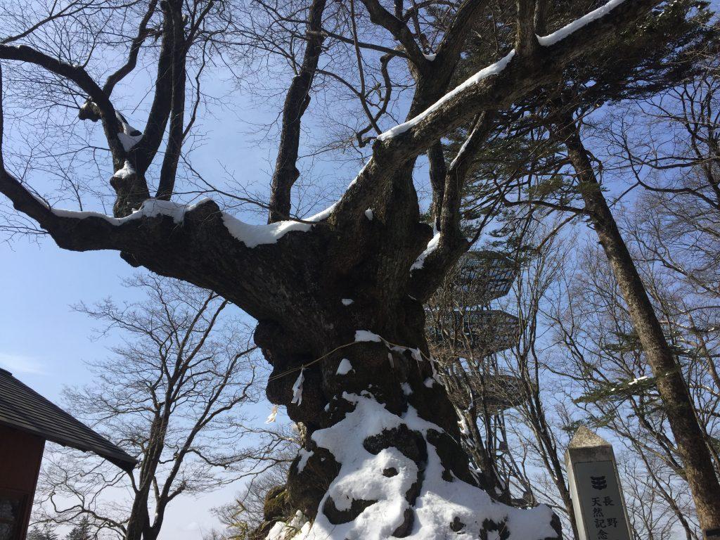 黒豆柴犬 うめ太 1歳 熊野皇大神社