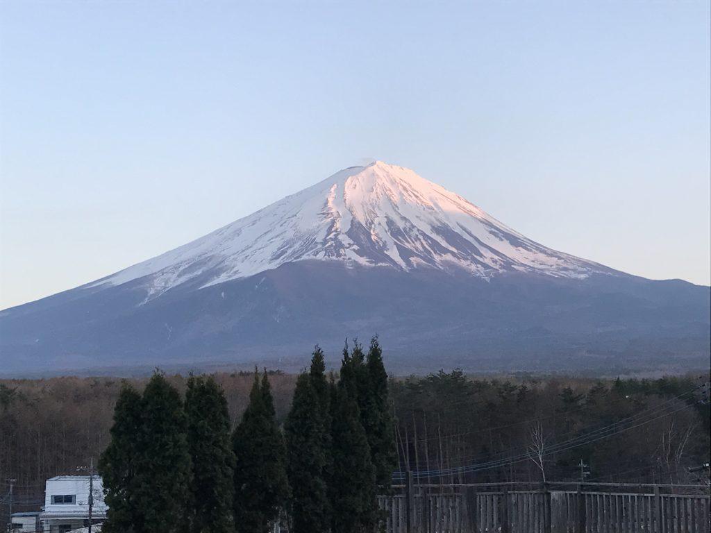 黒豆柴犬 うめ太 1歳2ヶ月 富士山