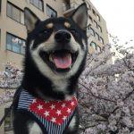 4月7日(金)は、初めて桜を見に行ったうめ太です🌸