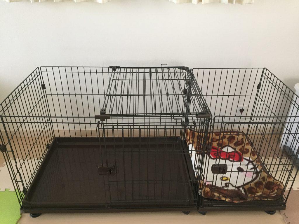 黒豆柴犬 うめ太 1歳3ヶ月 ケージオープン