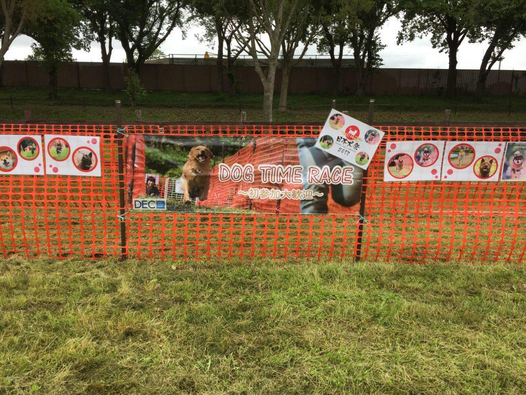 黒豆柴犬 うめ太 1歳3ヶ月 日本犬祭り