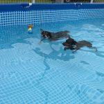 6月11日(日)は、「初めてのわんわん水泳教室」へ参加して来ました🐕