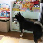 6月16日(金)から1泊、家族で青森へ行って来ました🚙 Part 1