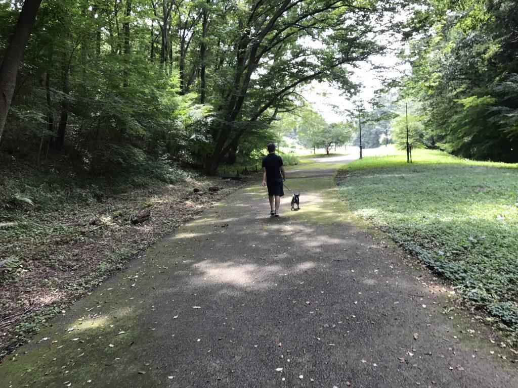 黒豆柴犬 うめ太 1歳半 都立桜ケ丘公園