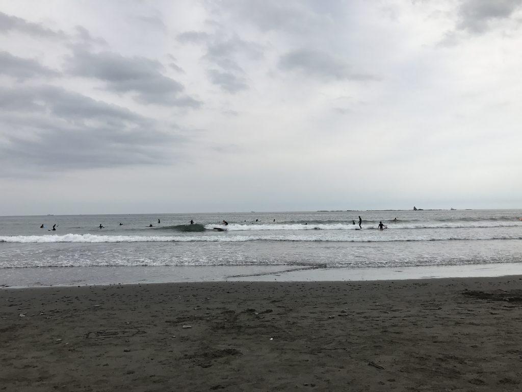 黒豆柴犬 うめ太 1歳8ヶ月 湘南茅ケ崎ヘッドランドビーチ