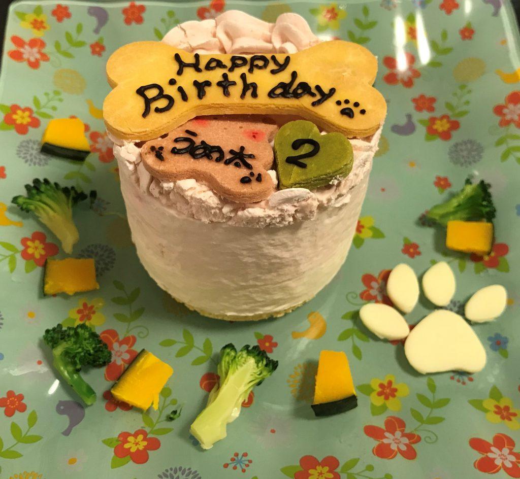 黒豆柴犬 うめ太 2歳 誕生日