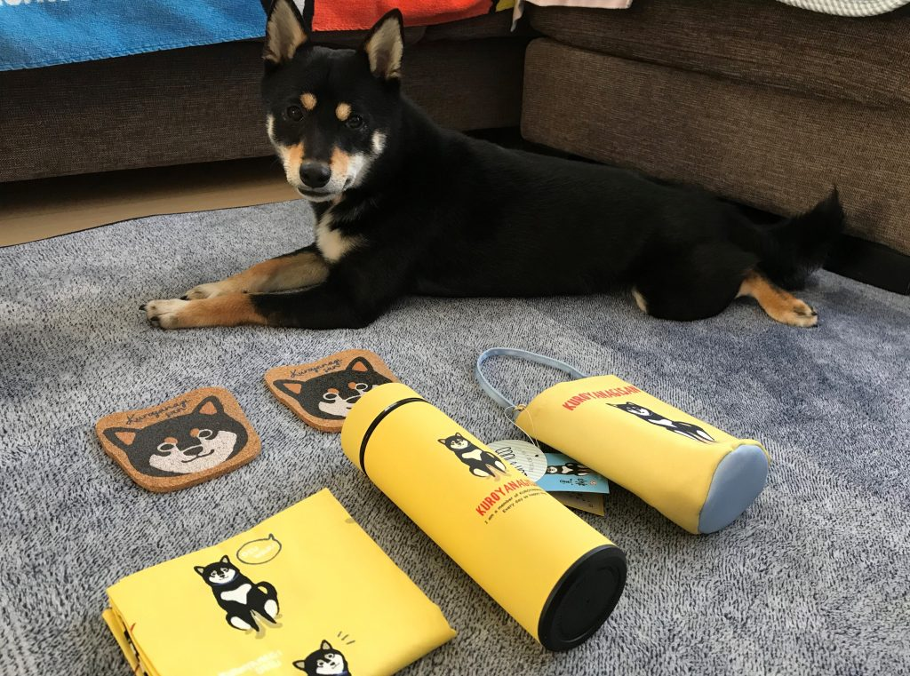 黒豆柴犬 うめ太 2歳2ヶ月 柴犬グッズ 黒柳さん